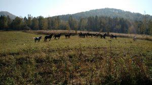 4-horses-in-field