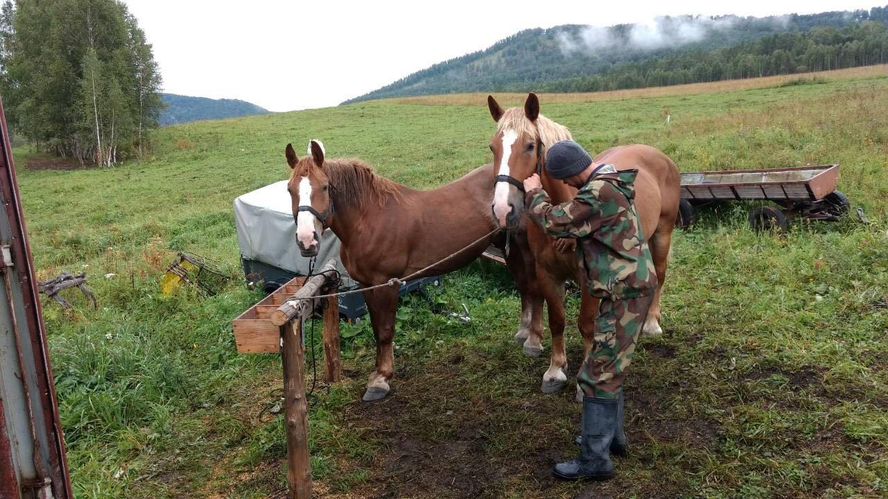 horses new team